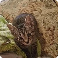 Adopt A Pet :: Little Louie - Ortonville, MI