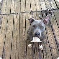 Adopt A Pet :: Jen - Wartrace, TN