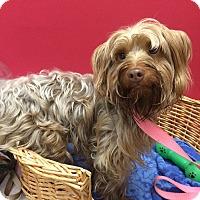Adopt A Pet :: Joe - Decatur, AL