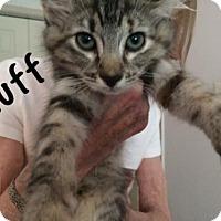 Adopt A Pet :: Fluff - Devon, PA