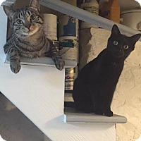 Adopt A Pet :: Salem & Lotus - Harrison, NY