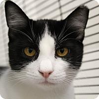 Adopt A Pet :: Elsie - Sarasota, FL