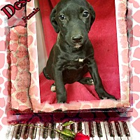 Adopt A Pet :: Destin in CT - Manchester, CT