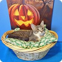 Adopt A Pet :: Calvin - Glendale, AZ