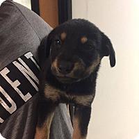Adopt A Pet :: Brett - Phoenix, AZ
