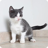 Adopt A Pet :: Felix C160394 - Edina, MN