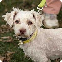 Adopt A Pet :: MISTLETOE - Maumee, OH