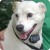 Adopt A Pet :: LIZZIE - Terre Haute, IN