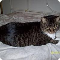 Adopt A Pet :: Izzy - Stafford, VA