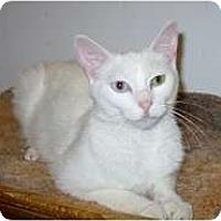 Adopt A Pet :: Nova - Shelton, WA