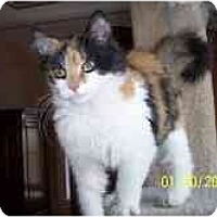 Adopt A Pet :: Maya - Arlington, VA
