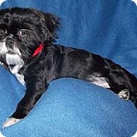 Adopt A Pet :: Jett - Mooy, AL
