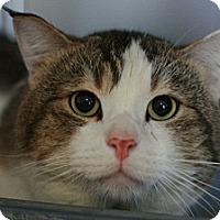 Adopt A Pet :: Mario - Canoga Park, CA