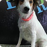 Adopt A Pet :: Ruby - Wytheville, VA