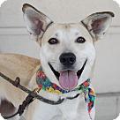 Adopt A Pet :: Val