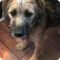 Adopt A Pet :: Willow in MO - North Kansas City, MO