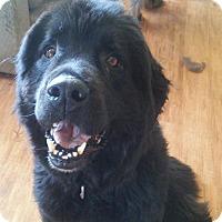 Adopt A Pet :: Mac-Adoption Pending - Lee's Summit, MO