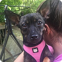 Adopt A Pet :: Marigold - Atlanta, GA