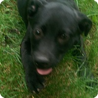 Adopt A Pet :: Junior / Boomer - Antioch, IL