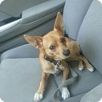 Adopt A Pet :: Freddy - Acushnet, MA