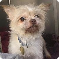Adopt A Pet :: Hitchcock - Oak Ridge, NJ