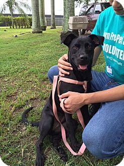 Labrador Retriever Mix Dog for adoption in Key Biscayne, Florida - Maylin