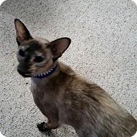 Adopt A Pet :: Fynn - Fairborn, OH
