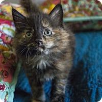 Adopt A Pet :: Clove - Savannah, GA