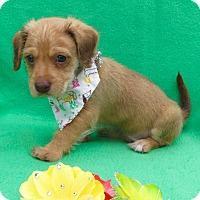 Adopt A Pet :: Cosmo - Irvine, CA
