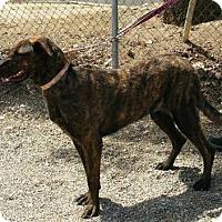 Adopt A Pet :: Rory - Yucaipa, CA