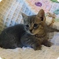 Adopt A Pet :: Brewster - Berlin, CT