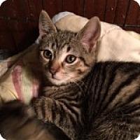 Adopt A Pet :: Keanu - Delmont, PA
