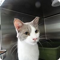 Adopt A Pet :: Bongo - Elyria, OH