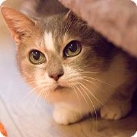 Adopt A Pet :: Granny Apple - Chicago, IL