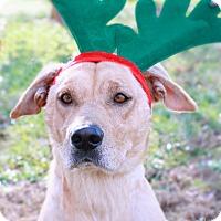 Adopt A Pet :: Luke - Monroe, NC