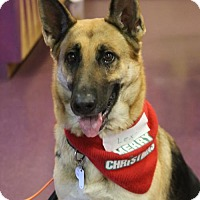 German Shepherd Dog Dog for adoption in Greensboro, North Carolina - Lexi