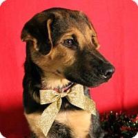 Adopt A Pet :: Doc - Dallas, TX