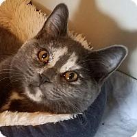 Adopt A Pet :: Whitney - Colfax, IA
