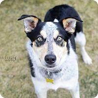 Adopt A Pet :: Radii - Salt Lake City, UT