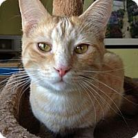 Adopt A Pet :: Alain - Byron Center, MI