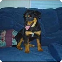 Adopt A Pet :: Ivy - Chandler, IN