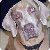 Adopt A Pet :: Dixie - Eustis, FL