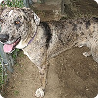 Adopt A Pet :: Thor - Grand Saline, TX