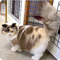 Adopt A Pet :: Parker - Davis, CA
