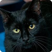 Adopt A Pet :: Splash - Queenstown, MD