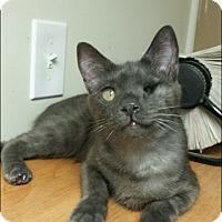 Adopt A Pet :: Winkie - Scottsdale, AZ