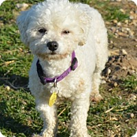 Adopt A Pet :: Miranda - Prole, IA