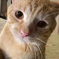 Adopt A Pet :: Oliver - Bear, DE
