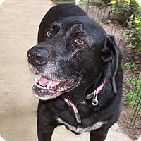 Adopt A Pet :: Mackie - Conway, AR