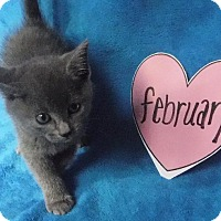 Adopt A Pet :: February - Batesville, AR